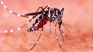 focos de dengue